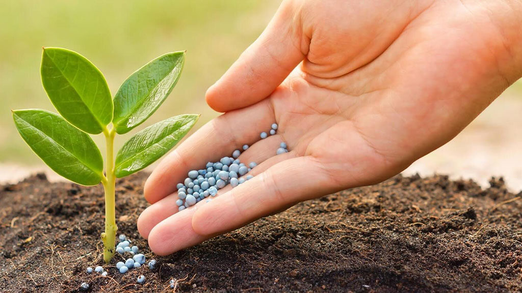 Cum se utilizeaza ingrasamintele organice?